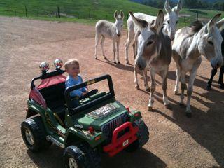 ethan jeep donkeys